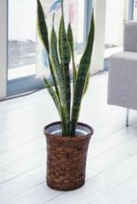 10 plantas de interior que limpian el aire http://desktopcostarica.com/articulos/10-plantas-que-limpian-el-aire