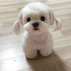 Funny Animal Pictures Of Today's Super Cute Puppies, Baby Animals Super Cute, Cute Baby Dogs, Cute Little Puppies, Cute Dogs And Puppies, Cute Little Animals, Cute Funny Animals, Cute Babies, Doggies