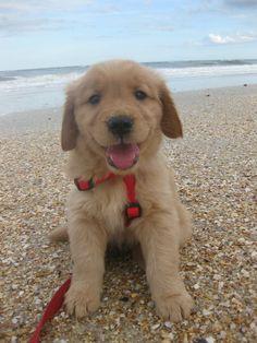First trip to the beach. #puppy