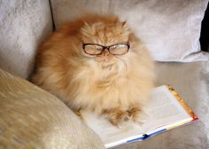 11 Cats Who Clearly Love to Read - GoodHousekeeping.com