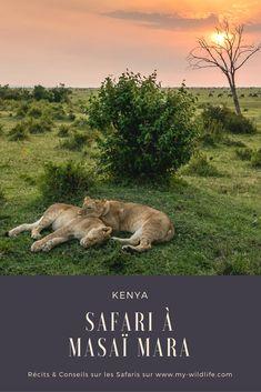 5 jours de safari à Masaï Mara au Kenya #Kenya #MasaiMara #safari