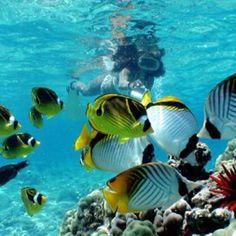 Snorkeling in Hawaii....