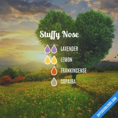 Stuffy Nose — Essential Oil Diffuser Blend Source by Stuffy Nose Essential Oils, Essential Oils For Babies, Doterra Essential Oils, Young Living Essential Oils, Doterra Blends, Young Living Diffuser, Young Living Oils, Essential Oil Diffuser Blends, Baby Massage