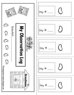 """Who loves planting lima beans at this time of the year? Students really enjoy taking on the role of a scientist and recording their observations. This is an easy way to do this and is referred to as an """"Observation Log."""" It is generic in nature and can be made numerous times."""