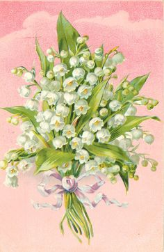 Full Sized Image: bunch of lilies-of-the-valley tied with purple/white ribbon, pink background - TuckDB