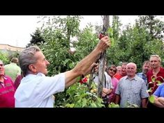 Ivan Hričovský: Slnečný úpal hrušiek - YouTube The New School, New School Year, Zone 7, Gardening Zones, Garden Boxes, Raised Garden Beds, Winter Garden, Youtube, Chinese
