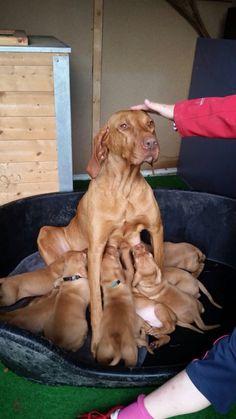 Mama Tika - John Richmond – Hundetrainer für Sport- und Jagdhunde
