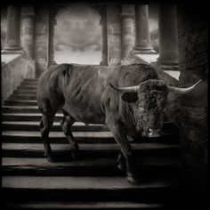 The Golden Calf is still alive... by yves.lecoq, via Flickr