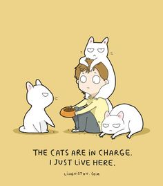 24 Fresh Hilarious Cat Comics By Brilliant Artist Lingvistov - World's largest collection of cat memes and other animals Crazy Cat Lady, Crazy Cats, Funny Cats, Funny Animals, Cute Animals, Cool Cats, Catsu The Cat, Image Chat, Cat Comics