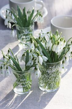.... und auch diese. White Anemone, White Roses, White Flowers, Spring Wedding Flowers, Romantic Flowers, Spring Bulbs, Spring Blooms, Flower Tea, Flower Pots