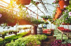 Certified Nursery Industry Plants and Collection   Gardeners Treasures nursery Adelaide is a state providing nursery and gardens, gaining practical experience in local plants and collection of trees, shrubs, herbs and perennials, as well as lake plants and species of wetland moderation.