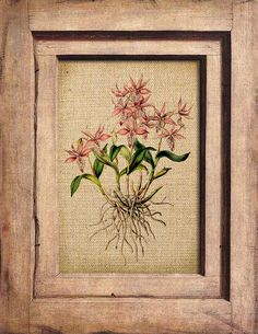 Vintage  Orchids Botanical Altered Printable Iron On by OVArtstore, $1.00