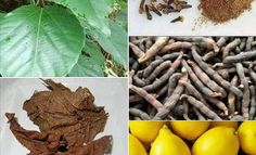African Herbs, Aloe Vera, Home Remedies, Weight Loss Tips, Green Beans, Carrots, Vegetables, Healthy, Food