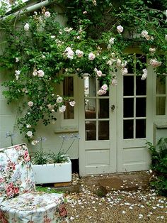 Four containers of climbing roses.
