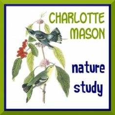 Drawing With Children: Nature Journal Style with Lesson Plans
