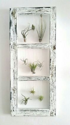 air plants in an old frame, though it would look nice horizontally too!