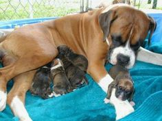 .What a sweet mommy and her pups!!