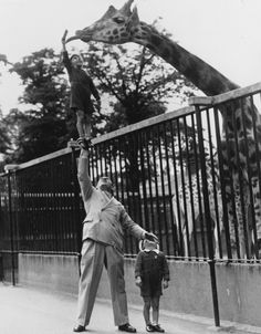 Please, don't feed the animals.    Circus strongman Paul Remos and his six and seven year old sons, who all appear in the revue Wonderful World, feeding a giraffe at London Zoo.  © General Photographic Agency