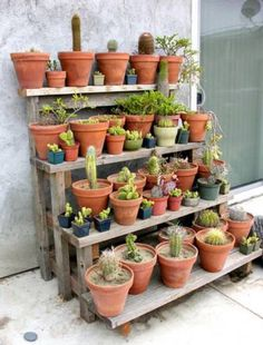 Outdoor shelves - All About Gardens Cacti And Succulents, Planting Succulents, Cactus Plants, Planting Flowers, House Plants Decor, Plant Decor, Outdoor Shelves, Garden Shelves, Succulent Landscaping