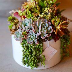 Lush and Colorful Succulent centerpiece by Dalla Vita.... dallavita's photo on Instagram