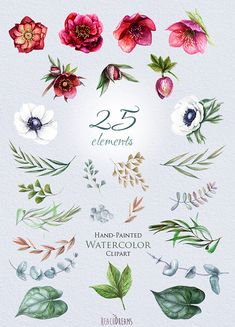 Wedding Watercolor Flowers Clipart Helleborus by ReachDreams