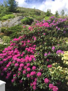 Travel Abroad, Norway, My Photos, Garden, Plants, Pictures, Photos, Garten, Lawn And Garden