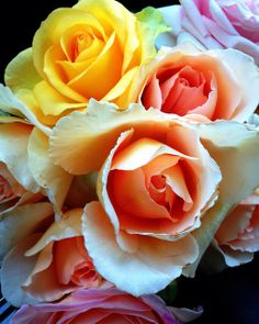 Bouquet of fresh roses Beautiful Flowers Garden, Love Garden, All Flowers, Beautiful Roses, Fresh Flowers, Pretty Flowers, Garden Art, Beautiful Gardens, Pink Roses