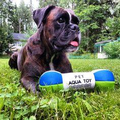 Pet Aqua Toy French Bulldog, Aqua, Toy, Pets, Animals, Products, Water, Animales, Animaux