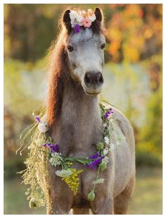 Horses are just beautiful creatures! I would love to have a sort of animal sanctuary for them someday. All The Pretty Horses, Beautiful Horses, Animals Beautiful, Cute Animals, Simply Beautiful, Majestic Horse, All About Horses, Horse Pictures, Horse Photography