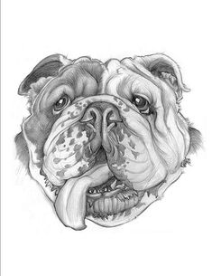 Football Bulldog Drawing | Little english bulldog logo structure and then i was thinking what