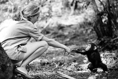 Dame Jane Goodall bonds with Flint, a chimpanzee born in her camp at Gombe, Tanzania. Flint was the first infant chimp whose development Goodall was able to follow up close until his death in 1968. Photographed by her then-husband Baron Hugo van Lawick.