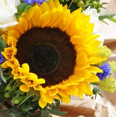 Florissimo - Flowers for weddings and events in Shropshire. SUNFLOWER, FEB-OCT. From Florissimo Flower Directory at https://uk.pinterest.com/ByFlorissimo/flower-directory/
