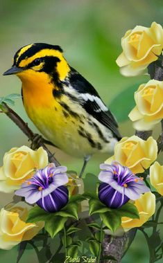 [New] The 10 Best Food Today (with Pictures) Colorful Animals, Colorful Birds, Pretty Birds, Beautiful Birds, Realistic Bird Tattoo, Animals And Pets, Cute Animals, Sunflowers And Roses, Bird Coloring Pages