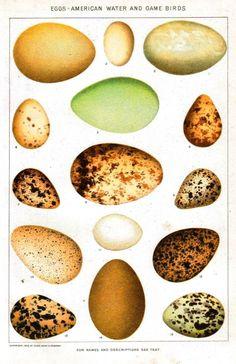 eggs...we will hatch again!