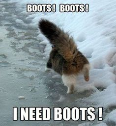 the kitty wants boots. Funny Cat Memes, Funny Cats, Funny Animals, Cute Animals, Silly Cats, Cats And Kittens, Crazy Cat Lady, Crazy Cats, Neko