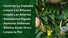 The ingredients used in natural medicine have special properties that nourish the body. Banana Uses, Natural Remedies, Health Tips, Health Fitness, Healing, Herbs, Youtube, Life, Maria Sharapova