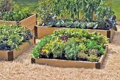 BIO-INTENSIVE VEGETABLE GARDENING: Bio-intensive gardening is the horticulture technique of growing large quantities of vegetables in a limited space using highly efficient, eco-friendly practices. Unlike traditional vegetable gardens, biointensive techniques utilize every part of the garden at all times throughout the growing season.Its designed to use less water, energy and fertilizer than traditional gardening.