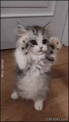 Kitten GIF Cute and precious floof kitty standing and dancing in a funny way Asddfgg hmmm ma alkyl am l eek thorn dew gym eek th eh hmmm www. Videos Three Kittens in a Basket Animal Cat Cats animal baby animal basket cat cute kitten funny cat memes hilari Cute Baby Cats, Cute Cats And Kittens, Cute Funny Animals, Cute Baby Animals, Kittens Cutest, Animals And Pets, Funny Cats, Cute Kitten Gif, Funny Jokes