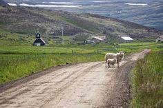 Road trip en Islande - Le sud des Fjords de l'Ouest | Islande | Blog voyages ➡ Prenez Place