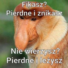 Znalezione obrazy dla zapytania nosaczsundajski memy Wtf Funny, Funny Jokes, Cool Pictures, Funny Pictures, Polish Memes, Happy Photos, Dark Memes, Haha, Quotes