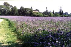 Into the flowers!Playing in Montpelier tastes romantic! Parcs, Vineyard, Romantic, France, Playgrounds, Explore, Flowers, Outdoor, Kids