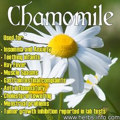 ❤ Herb Of The Day: Chamomile ❤