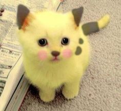 What if pikachu was a cat the whole time
