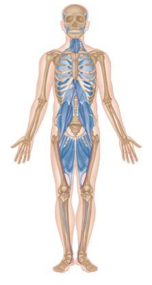 Myofascial Trigger Points