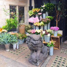 Always cheered by the sight - and incredible scent! - of flowers and foo dogs at the side entrance to #libertylondon - swipe to see both on either side. #lovelondon #londonflowers