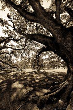 Under the old oak tree.