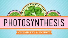 Photosynthesis: Biology #8