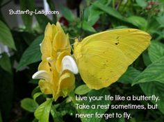 LiVe YouR LiFe LiKe a BuTTeRFLy...