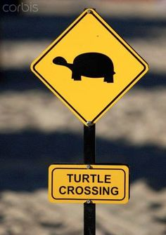 An poster sized print, approx (other products available) - Yellow warning sign turtle crossing, turtles crossing the beach for laying their eggs, Manavgat, Turkey - Image supplied by Fine Art Storehouse - Poster printed in Australia Reptiles, Cute Turtles, Sea Turtles, Baby Turtles, Turtle Time, Tortoise Turtle, Tortoise House, Tortoises, Warning Signs