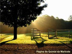 """Estou sempre em viagem /  O mundo é a paisagem /  que me atinge /  de passagem.  [""""Viagem infinita"""", Helena Kolody] /   Bom sábado!"""